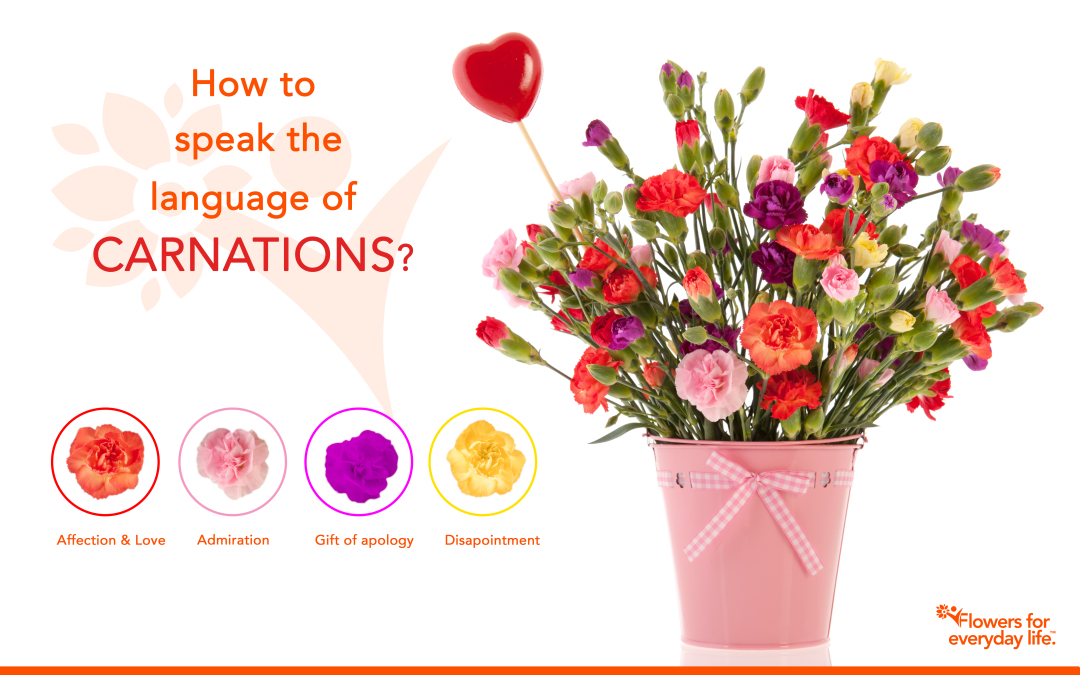 Carnations for Valentine's Day? Learn their secret language